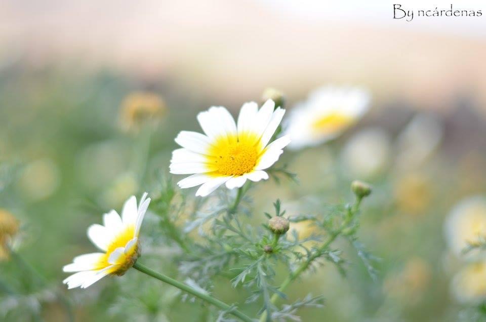 Bsible - Fotografía - Lanzarote